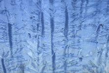 winterhimmeleisblumen-04