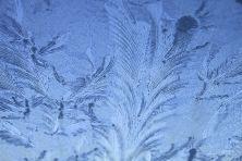 winterhimmeleisblumen-05
