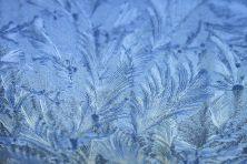 winterhimmeleisblumen-06