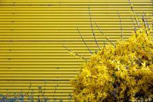 yellow-01