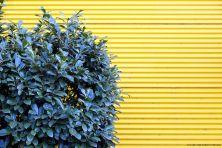 yellow-03