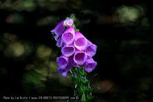 foto-115_780x520